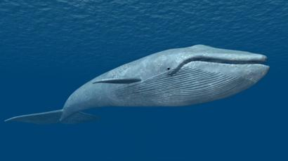 Why is 'Blue Whale' hysteria gripping India? - BBC News
