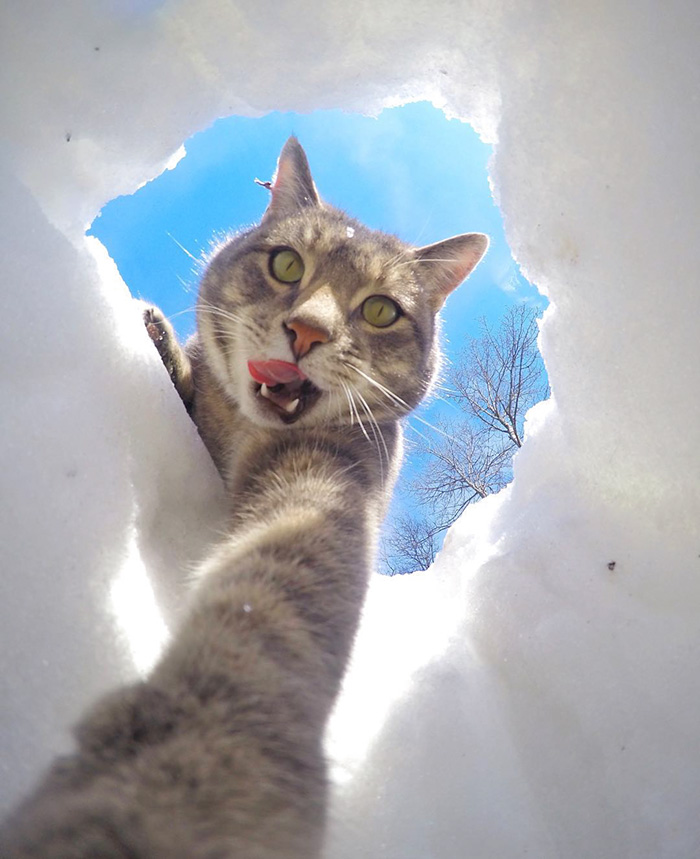 manny-cat-takes-selfies-dogs-gopro-16