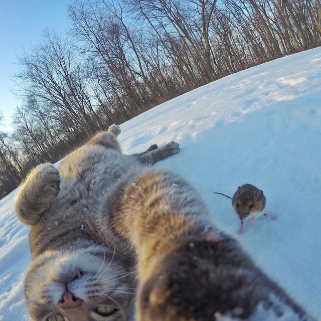 manny-the-cat-takes-better-selfies-than-you-10