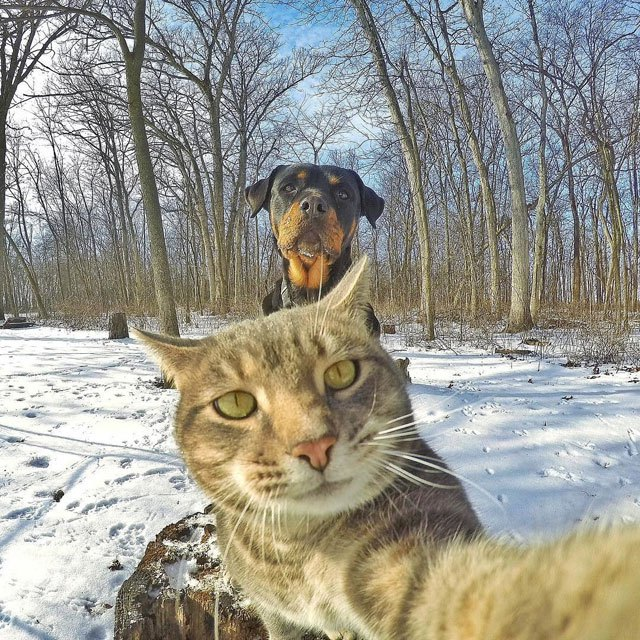 manny-the-cat-takes-better-selfies-than-you-12