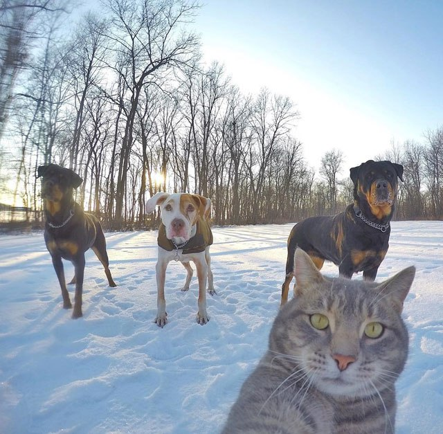 manny-the-cat-takes-better-selfies-than-you-13