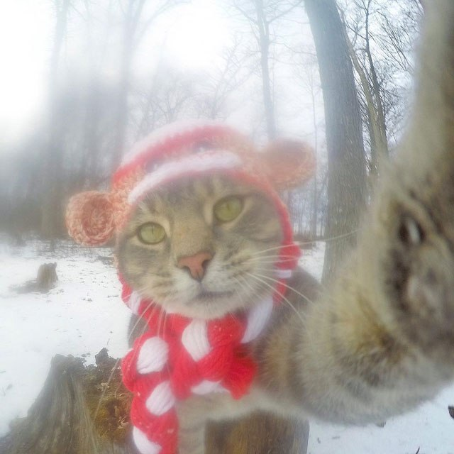 manny-the-cat-takes-better-selfies-than-you-15