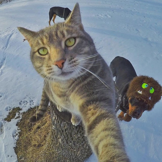 manny-the-cat-takes-better-selfies-than-you-8